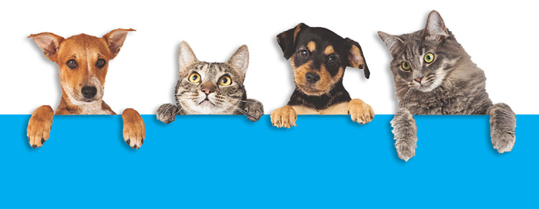 PAW:  Pet Adoption Week Monday, August 2 - Saturday, August 7