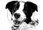 Ramsey Beyer pet portrait